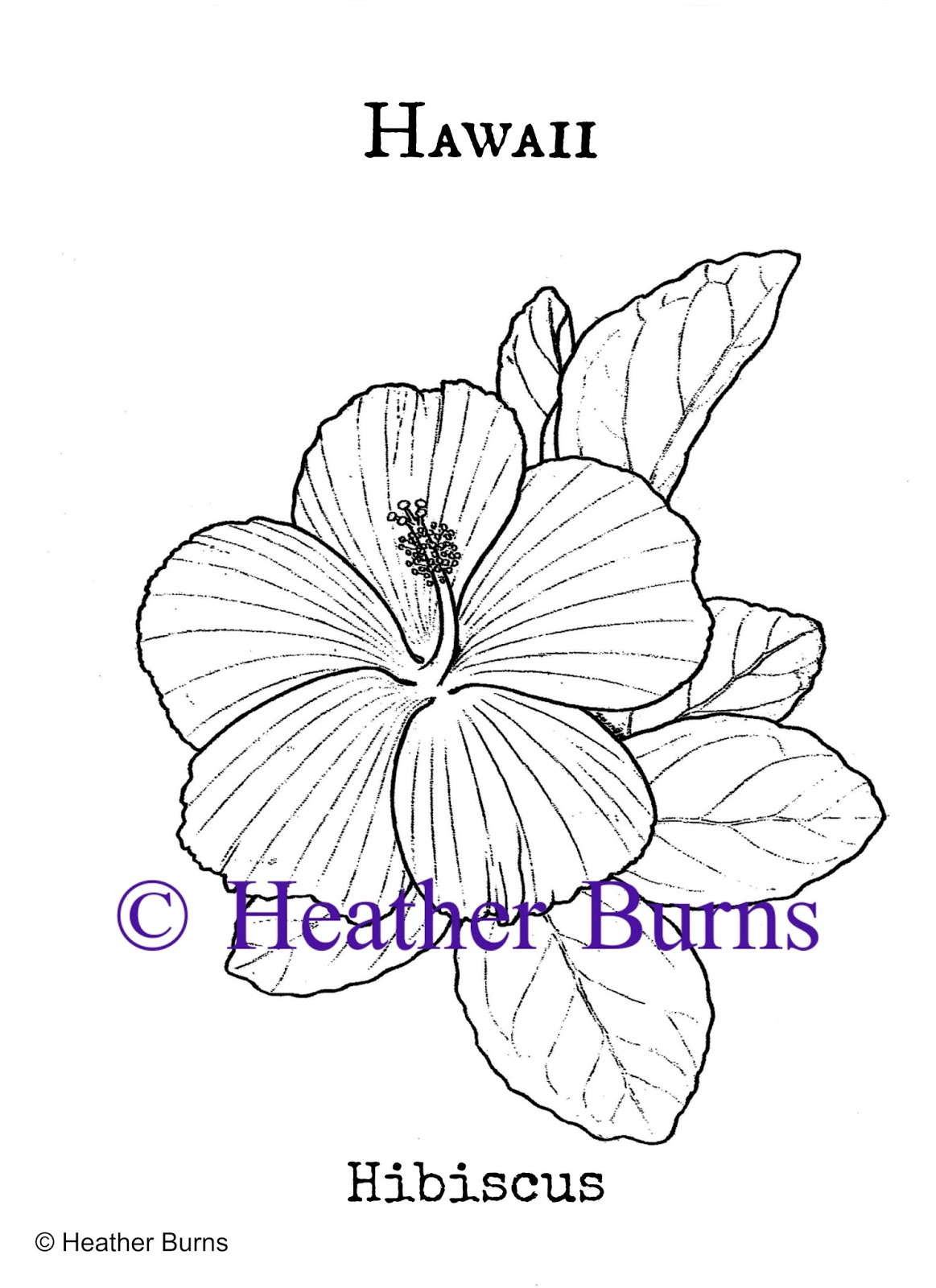 State Flower Coloring Book Hawaii State Flower Hibiscus