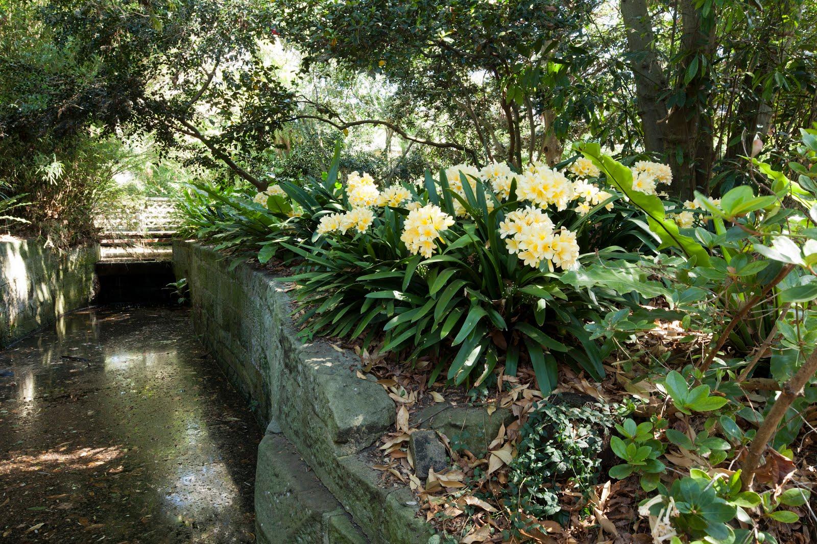 Garden sketchabout the royal botanic garden sydney for Landscape gardeners sydney