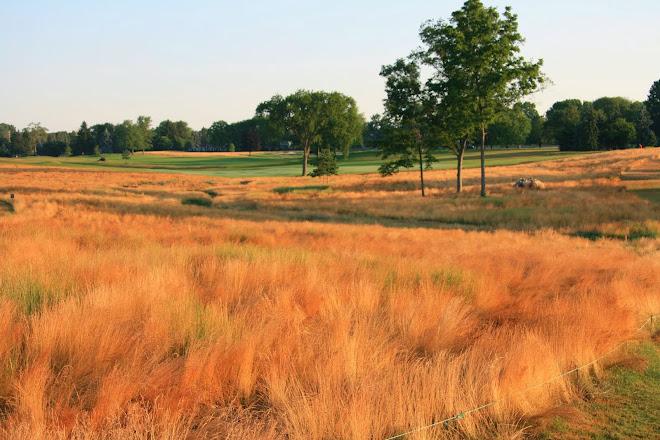 Fine Turgrass Management