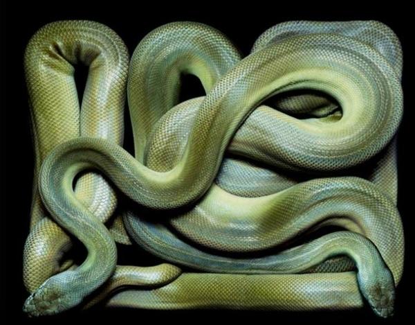 http://2.bp.blogspot.com/-UVdcLQ8rJvE/TpbP-6jNZ1I/AAAAAAAADBc/w64gVj5KokU/s1600/256715%252Cxcitefun-fascinating-snakes-13.jpg