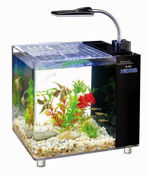 Setting Up Your First Saltwater Tank Fishing Kims