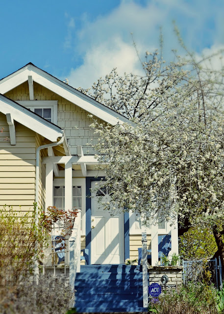 Greenwood, midcentury, spring, seattle, blossoms, flowering tree, cherry blossoms, flowers