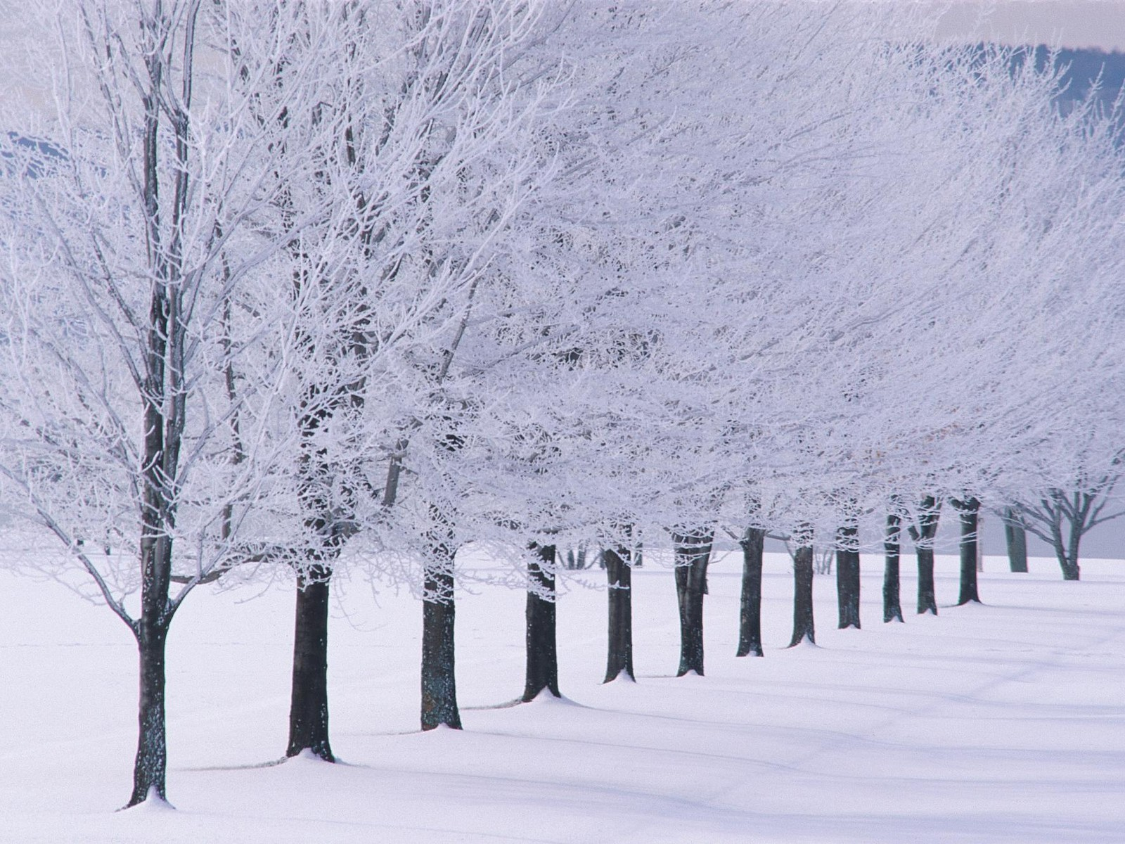 http://2.bp.blogspot.com/-UWgr2fipsdU/T6s2alGCT2I/AAAAAAAAE4k/KKgSpTcYshg/s1600/winter%2Bwallpaper%2B04.jpg