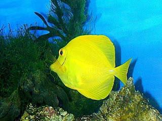 Funny tropical fish wallpaper Funny Animal