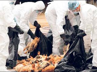 Kematian Akibat Selesema Burung di China Meningkat
