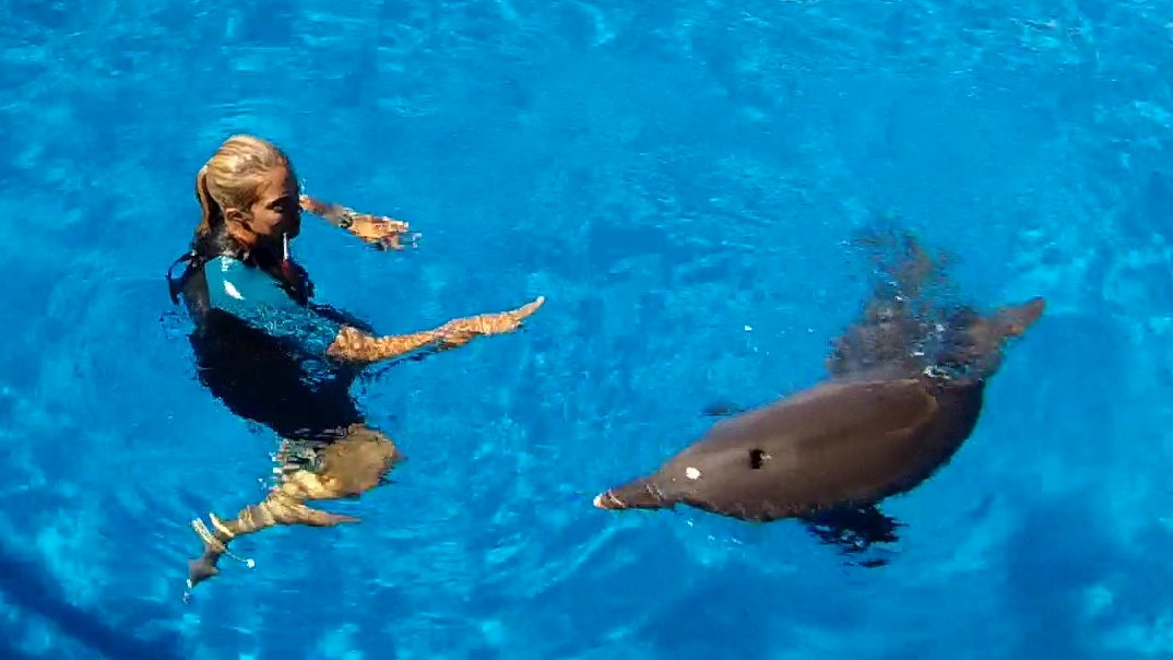 Trainerin schwimmt mit Delfin im Gulfarium, Marine Adventure Park in Fort Walton Beach, Florida USA