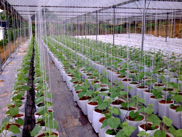 Inovasi pertanian tingkat pengeluaran, KUALA LUMPUR: Bidang pertanian negara perlu menjadi sebahagian daripada rangkaian bekalan makanan global kerana ia bukan saja mampu meningkatkan pendapatan petani tetapi menarik golongan muda menceburi sektor itu.