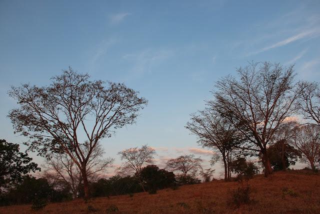 Adaptações das plantas do Cerrado que na imagem retrata o cerradão.