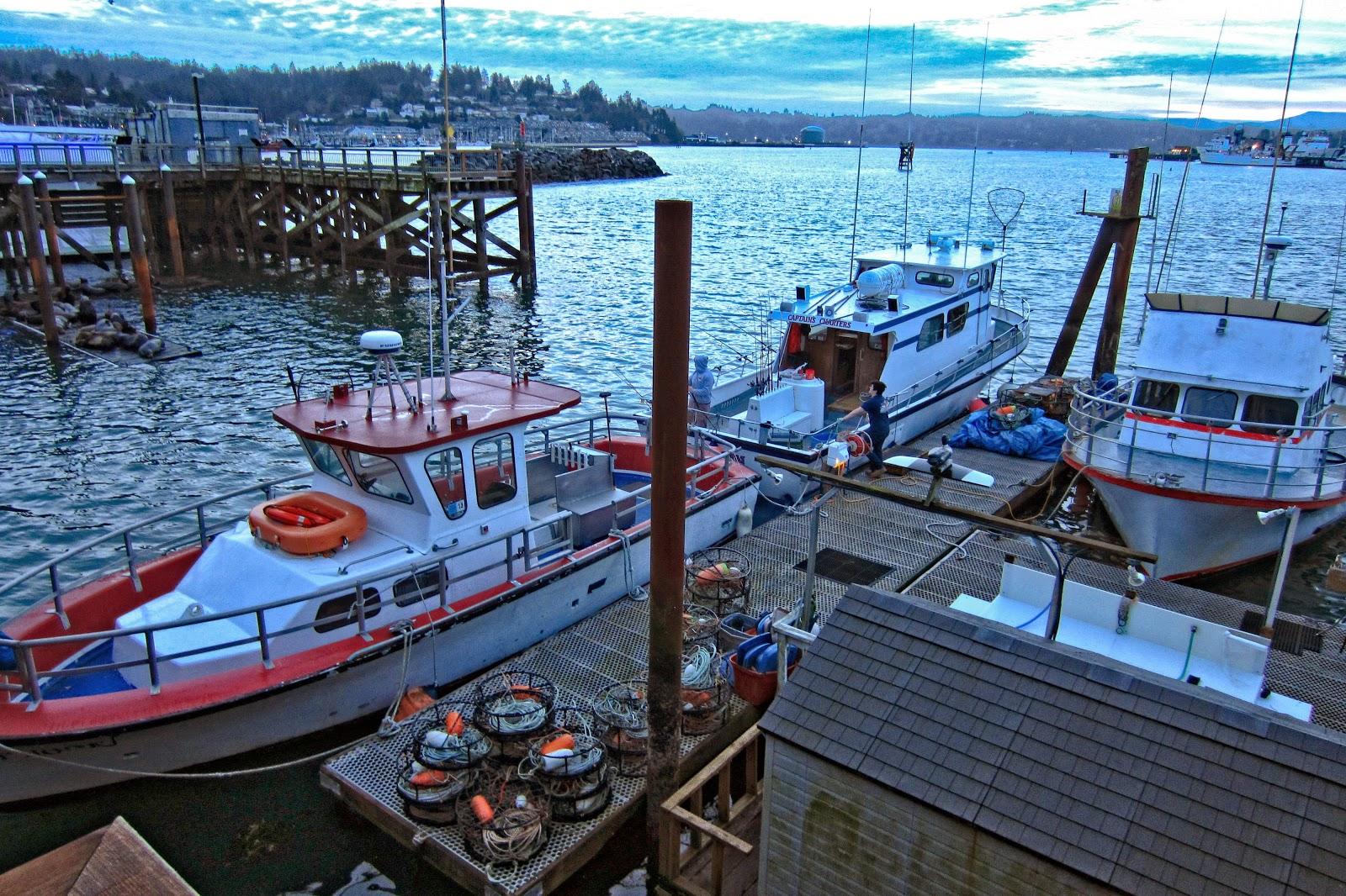 Thom zehrfeld photography captain 39 s reel charters for Newport oregon fishing charters