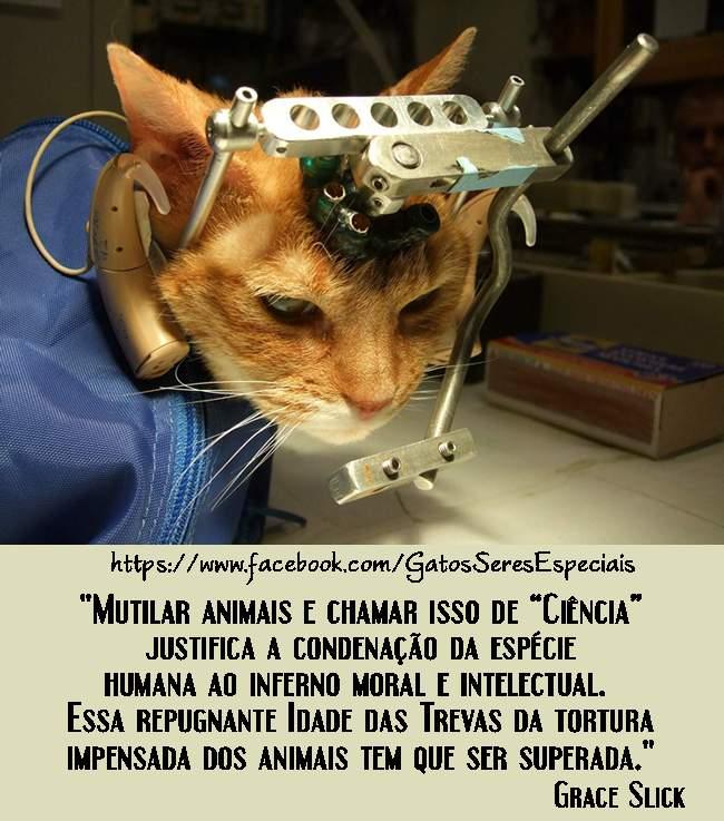 Animais Ame Os E Os Deixe Viver Animais Ame Os E Os Deixe Viver