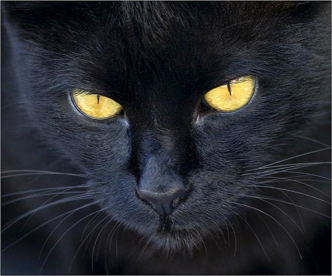 secreto-negro