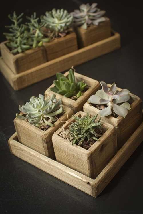 Vaso de suculentas com madeira reutilizada