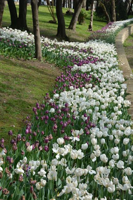 Yildiz Park Tulips Istanbul
