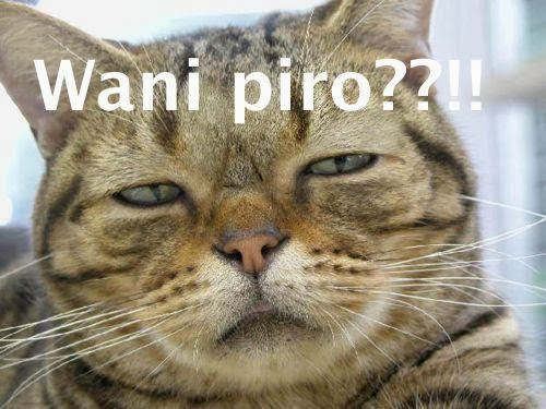 Gambar Kucing - Wani Piro ?