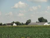 Green, green crops