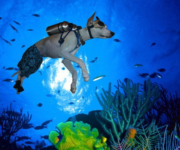 Image Result For Can Dogs Dive