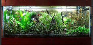 Planted freshwater aquarium with premium LED lighting