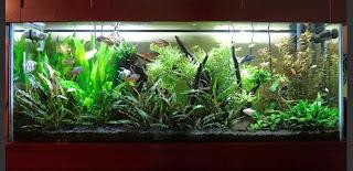 Planted freshwater aquarium with premium LED lighting