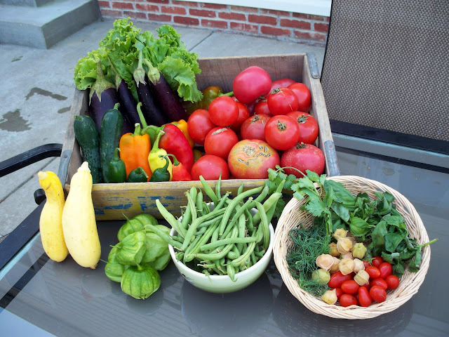Farm fresh vegetables organic squash cucumber pepper eggplant lettuce tomatillos tomatoes green beans basil