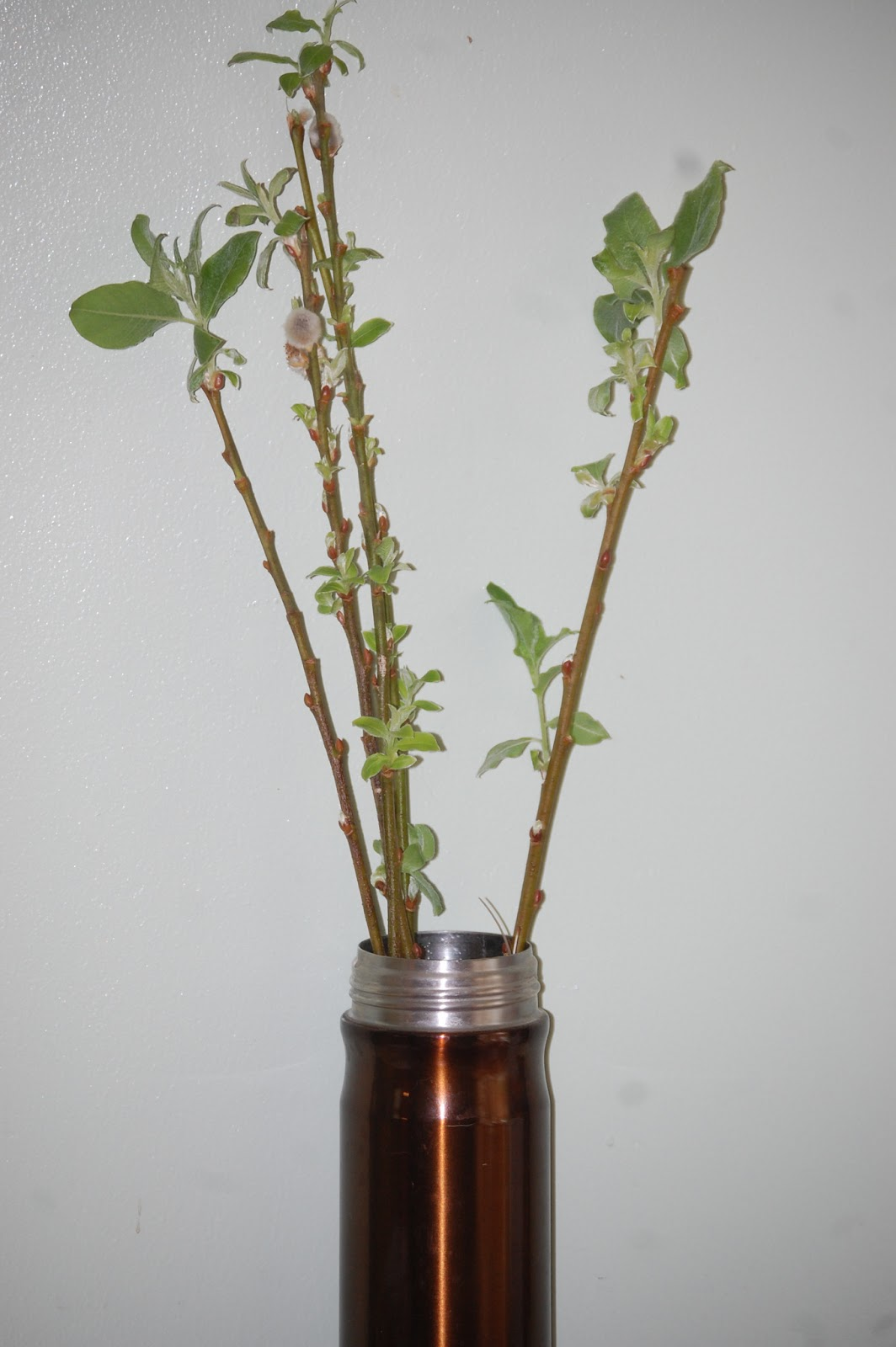 Propagating Pussy Willow