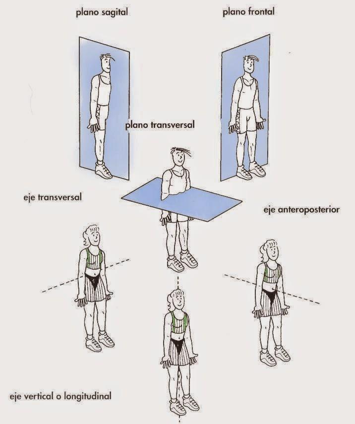Maldita Anatomia: Planos del movimiento humano