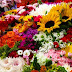 Colombia Flowers Prepared, Shipped Overseas