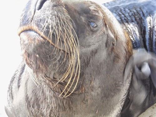 صور سبع البحر حديقة الحيوان