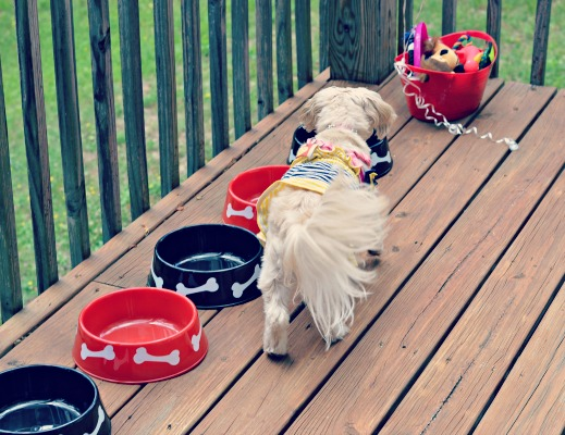 dog drinking from bowl