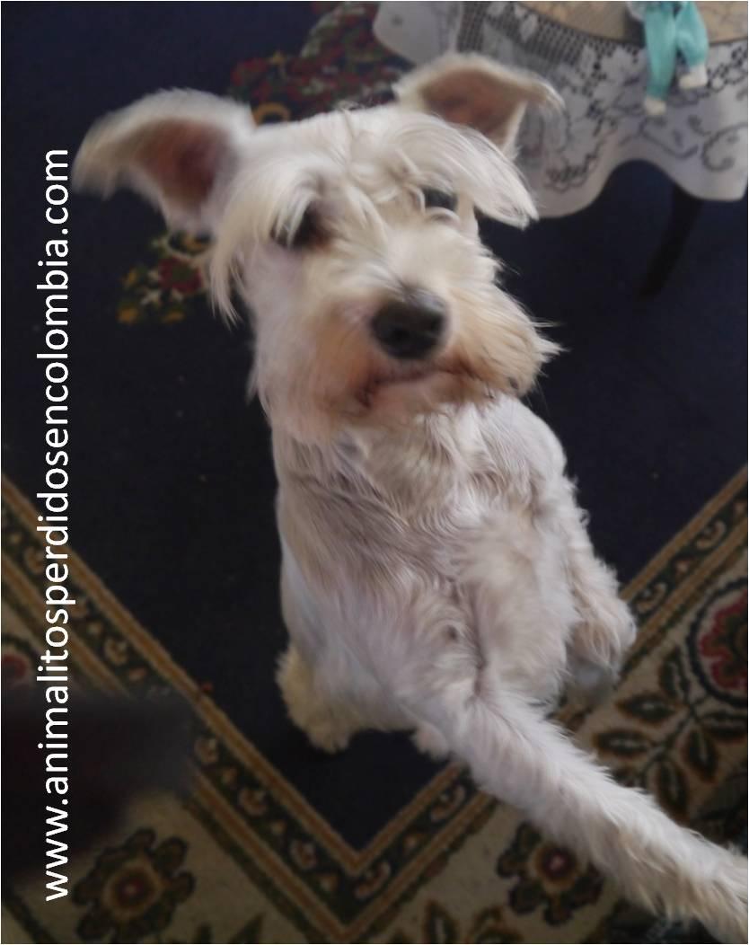 Animalitos perdidos en colombia perdida bogot perra for Barrio ciudad jardin sur bogota