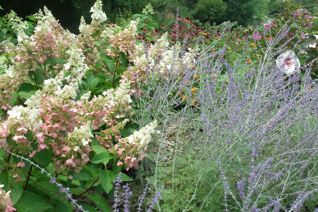Hydrangea paniculata, Russian sage and Echinacea at James Gardens Etobicoke by garden muses: a Toronto gardening blog