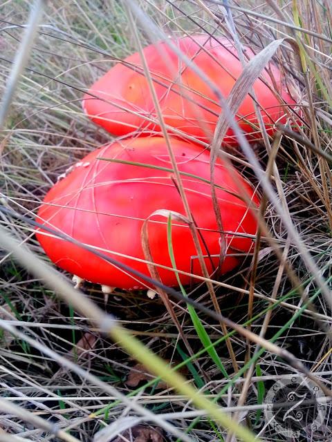 jesien grzyby