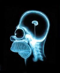 cerebro, homer