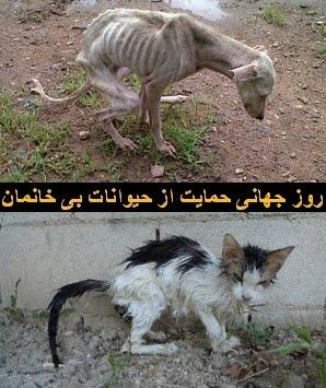 ۲۴ ﻣﺮﺩاﺩ روز جهانی حمايت از حيوانات بی خانمان