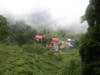 Protection of Darjeeling Tea as a Geographical Indication