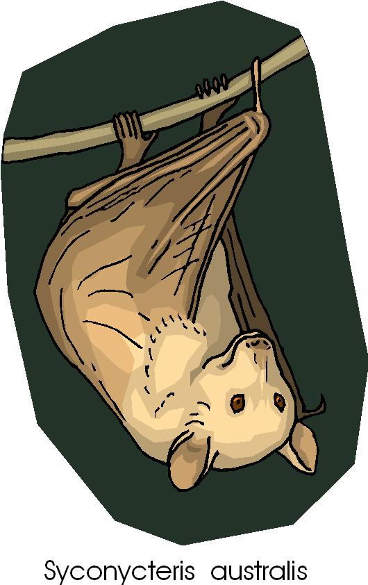 Bat Free Animal Clipart