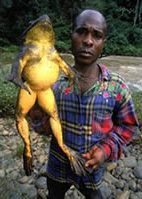 Weirdest Frogs On Earth World's Largest Frog
