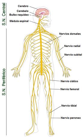 Funciones del omega 3 6 y 9
