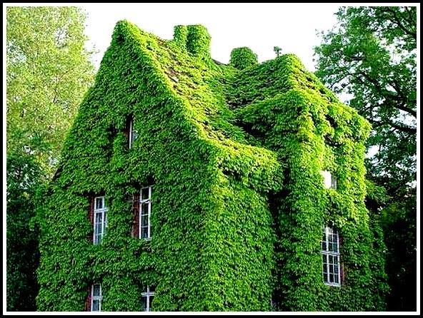 Kesan Rumah Hijau - Greenhouse Effect