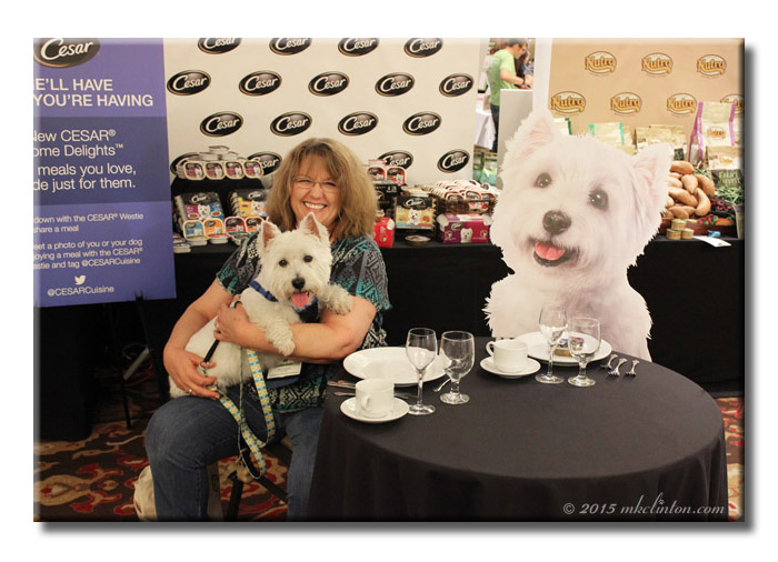 Westie meets Westie for tea