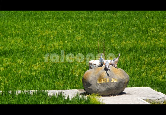 "3 bebek buatan yang berdiri diatas batu bertuliskan ""BEBEK JONI"" ini merupakan sebuah landmark untuk Bebek Joni Restaurant Bali yang terletak di Ubud, Bali. Di sekitar landmark ini merupakan hamparan sawah yang luas sebagai suatu kesatuan dari pemandangan indah saat duduk menikmati santapan di Bebek Joni."