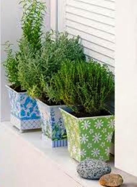 Todas las recetas hierbas en macetas for Plantas aromaticas de interior