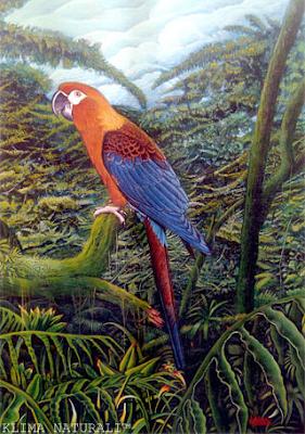 Arara Vermelha de Cuba (Ara tricolor)