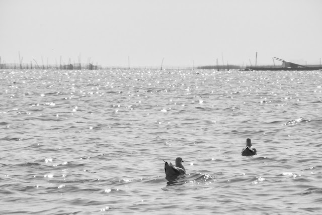 Birds, Chilka Lake