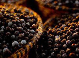 aronija, sibirska aronija, lekovita svojstva aronije, slike aronije, aronija slika, fotografije aronije, sadnice aronije,