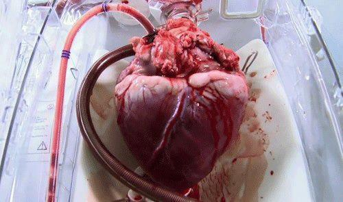 Interesting Facts about Heart !!! | Do You Know?