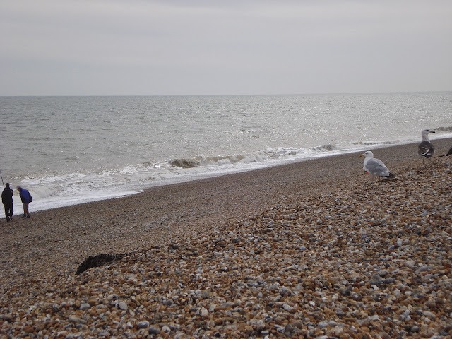Seagulls on the shingle