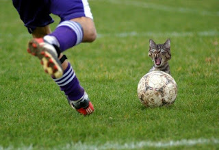 Funny Picture - Football Cat