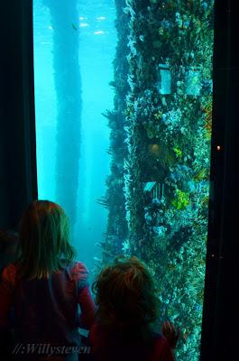 Terumbu karang di tiang Dermaga Busselton