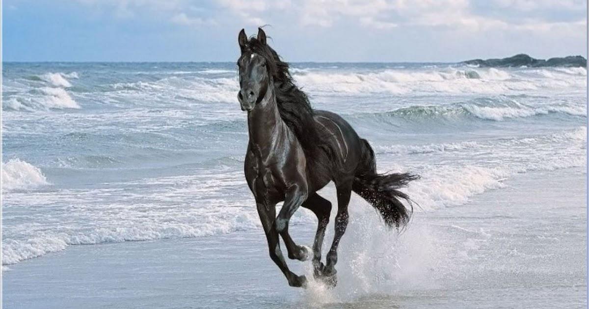 bambino c 39 est tres beau un cheval. Black Bedroom Furniture Sets. Home Design Ideas