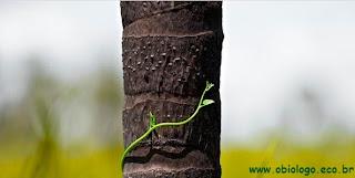 árvore, ecologia, biologia